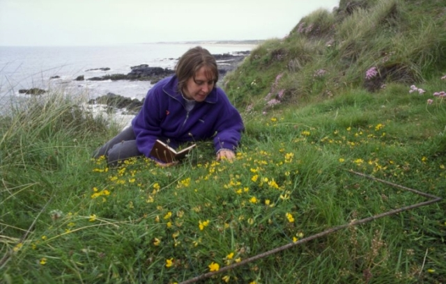 Flower recording at Forvie NNR, photo Lorne Gill/SNH