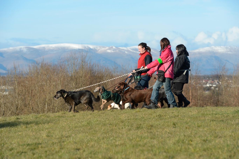 Dog Walking Falkirk