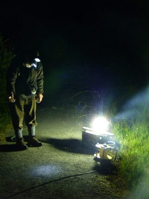 Moth-trapping evening at Loch Leven NNR