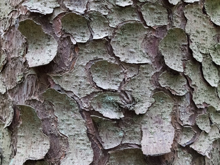 Bark: Glen Lyon