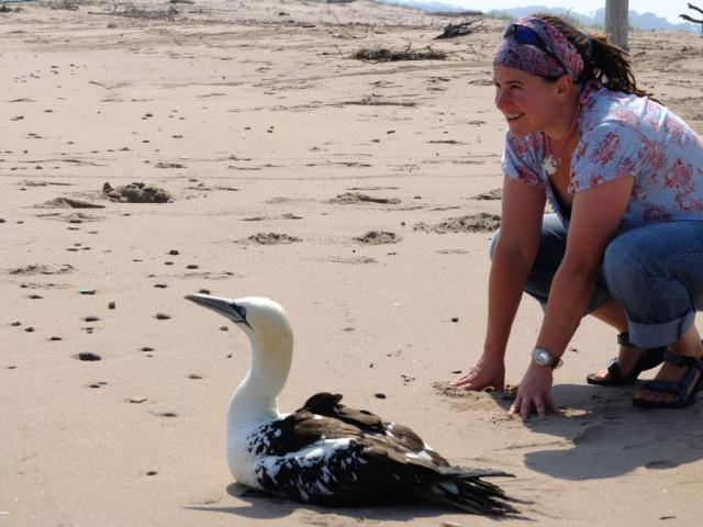Reserve Manager at St Cyrus, Therese Alampo, releasing a gannet