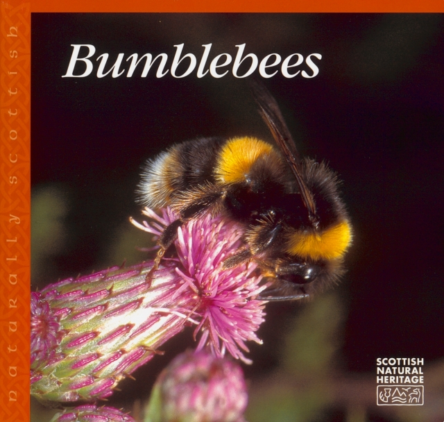Bumblebees booklet