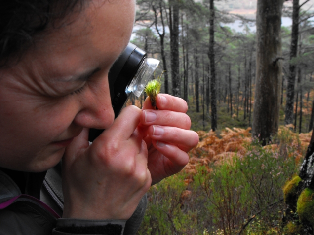 Julie Smith looking closely at a specimen