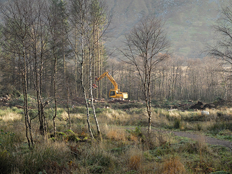 Felling Trees in Glen Nevis