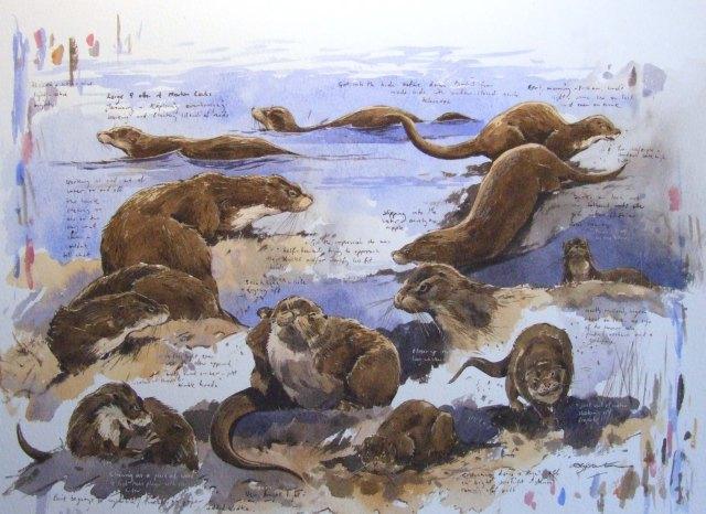 An otter study by Derek Robertson