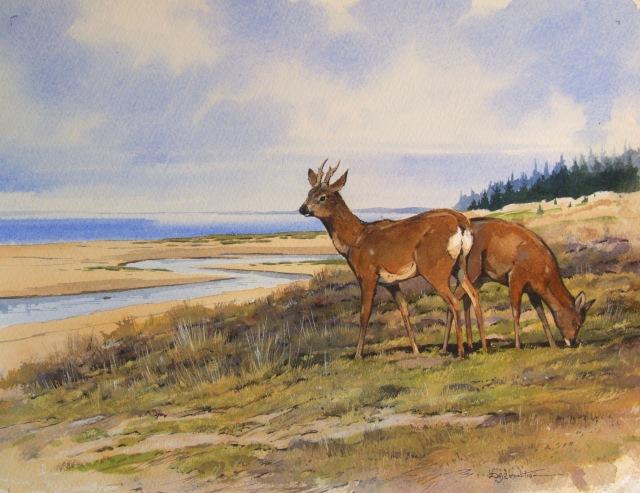 Roe deer at Tentsmuir