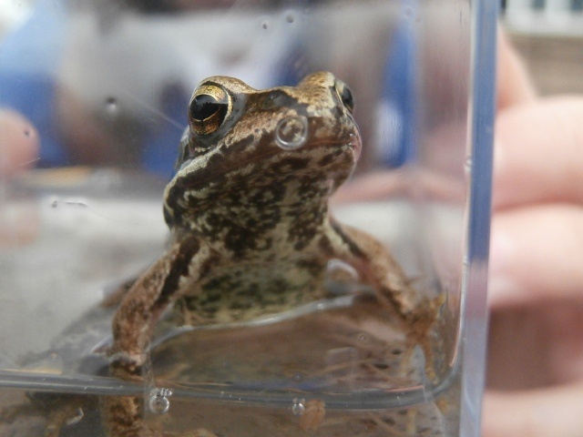 A frog photographed by local school children