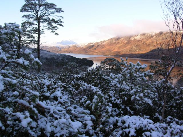Loch Maree from Beinn Eighe NNR pinewoods.