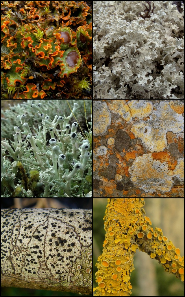 Lichens are a diverse group that add colour and texture to our landscape.