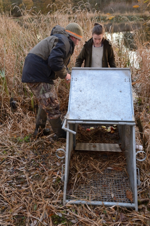 Robert Needham, a Scottish Beaver Trial field officer, and Helen Dickinson inspecting a trap.