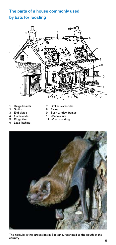 Sample pages from one of our bats publications