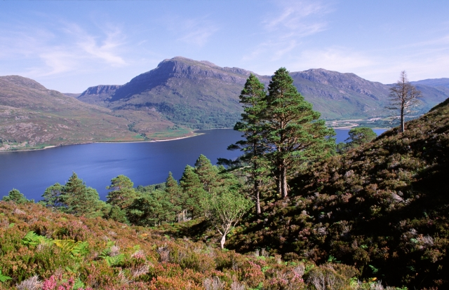 View over Loch Maree from Beinn Eighe NNR