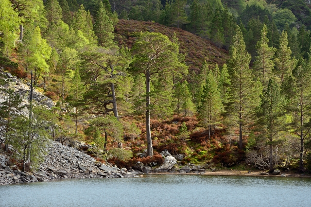 An Lochan Uaine in the Cairngorms National Park