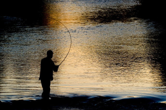 Salmon angling on the River Tweed, Berwickshire.