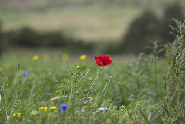 Wild flowers at Creag Meagaidh earlier this year