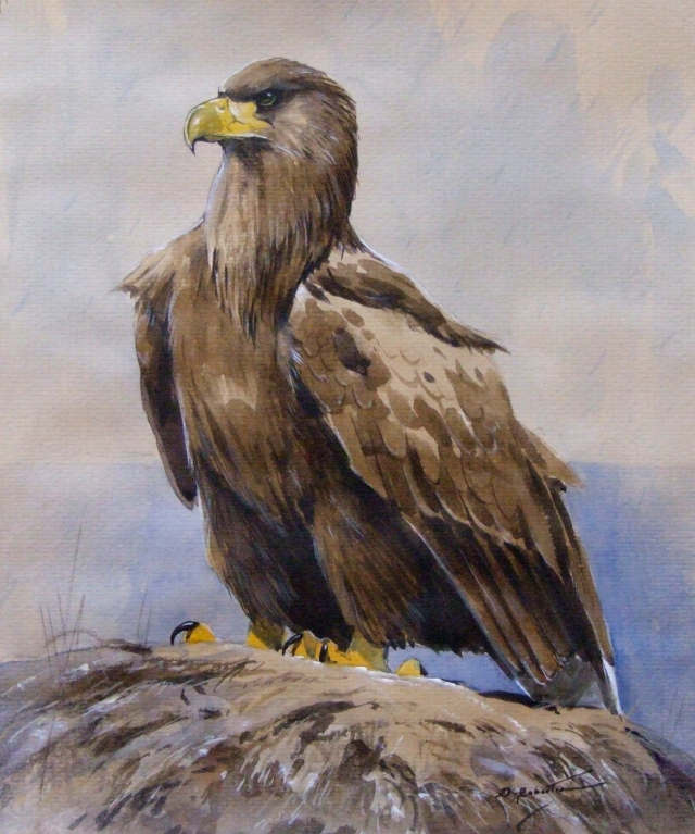 Sea eagle on the shore- Derek Robertson