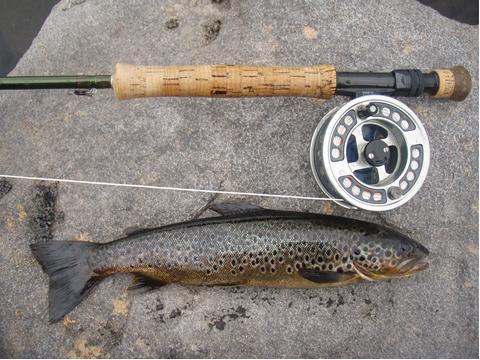 Loch Ericht trout