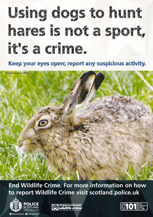 0145-15-AR-Wildlife-Crime-Poster-subtopic-Hare