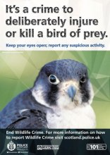0145-15-AR-Wildlife-Crime-Poster-subtopic-raptor