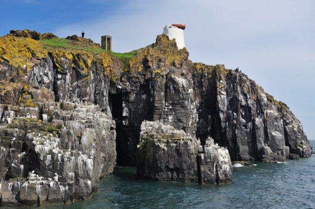 Isle of May NNR. ©Lorne Gill/SNH