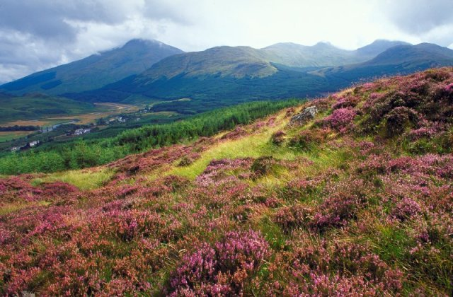 Heather moorland, Strath Fillan near Crianlarich. © Lorne Gill/SNH