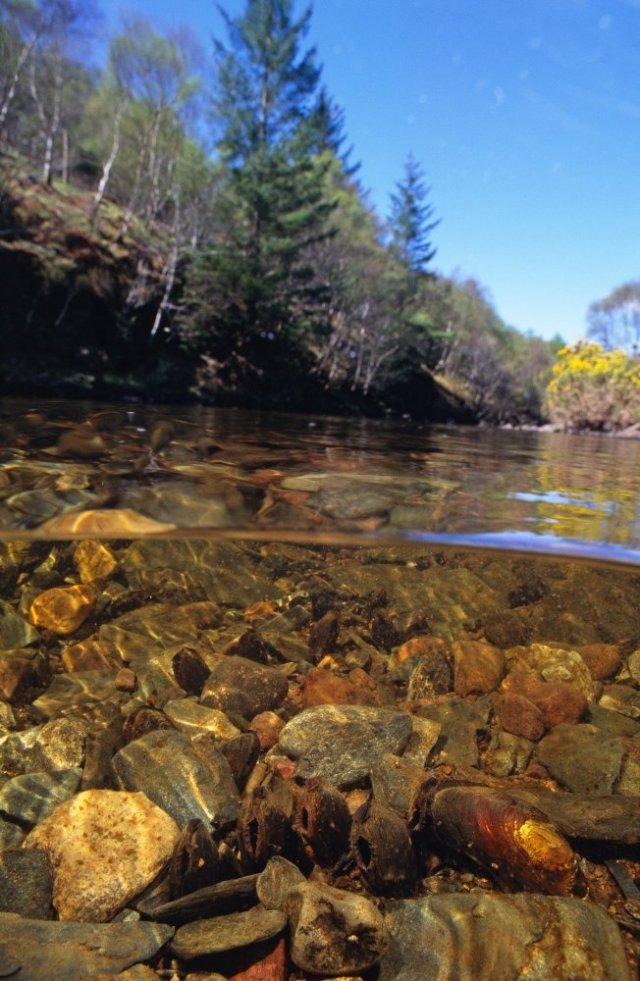 Freshwater pearl mussels ©Sue Scott/SNH