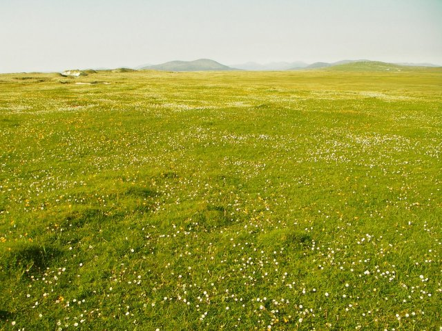 The roots of machair plants are colonised by arbuscular mycorrhizal fungi that extend the plant root systems in search of nutrients (David Genney).