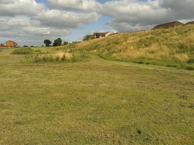 Typical grassland habitat in the east end of Glasgow