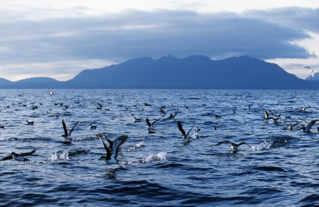 on the sea around the Isle of Rum NNR. ©Laurie Campbell/SNH