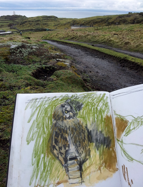 Sketching a short-eared owl. Kittie Jones