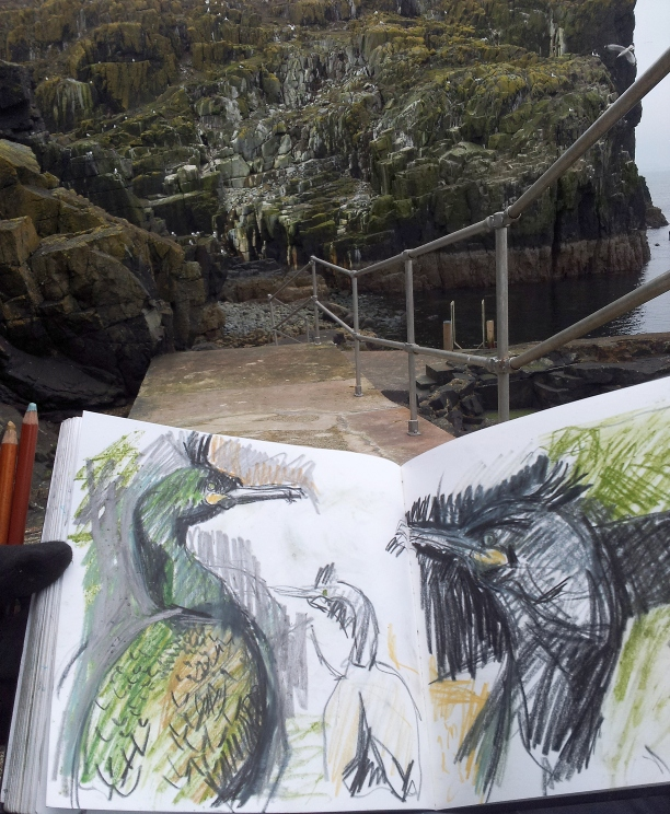Sketching shags at Alterstanes harbour. Kittie Jones