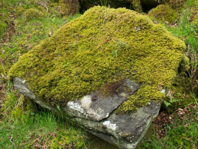 Mossy boulder, temperate rainforest, Argyll. Stan Phillips