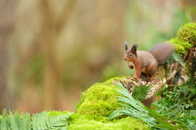 RedSquirrel-D5147.JPG