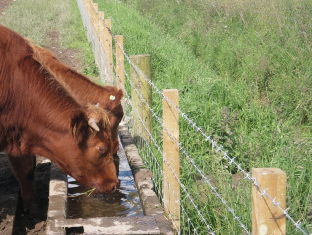 SLM Incentive Scheme financed water trough.