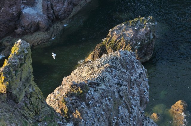 St Abbs Head's stunning coastline. ©Lorne Gill/SNH