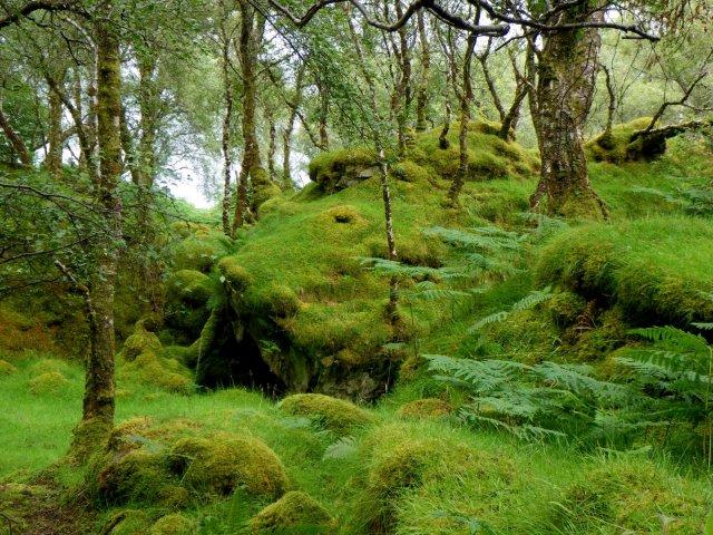 West coast temperate rainforest. Dave Genney
