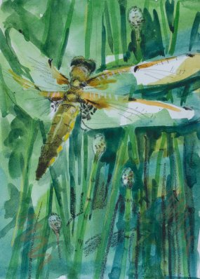 Dragonfly by Jane Smith.