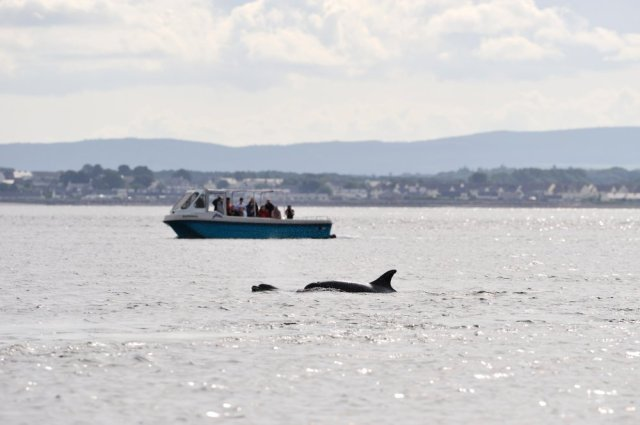 Dolphin watching on the Moray Firth. ©Lorne Gill