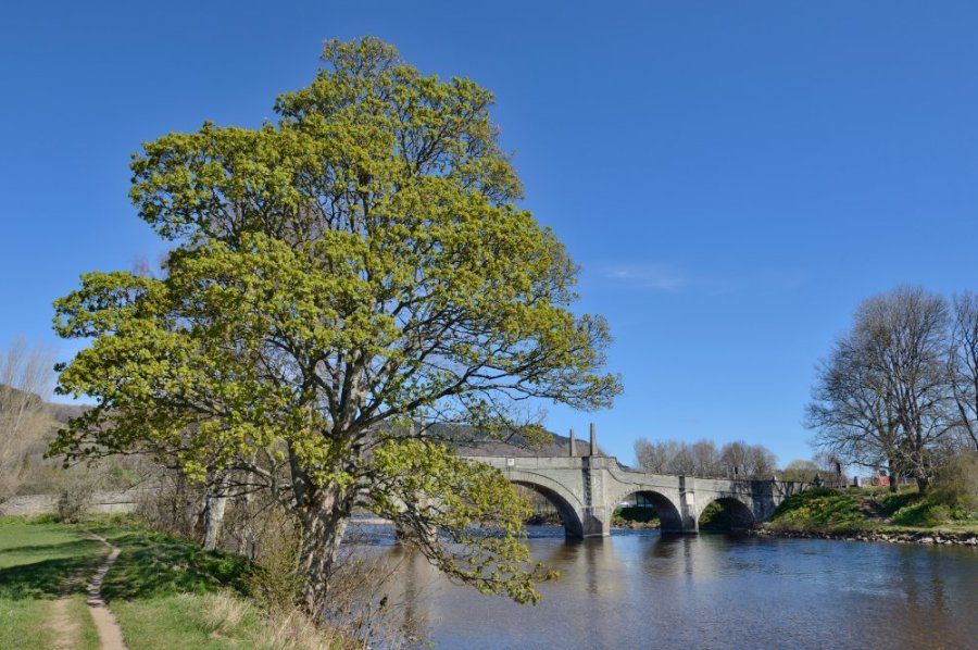 The River Tay at Aberfeldy, Perthshire. ©Lorne Gill/SNH