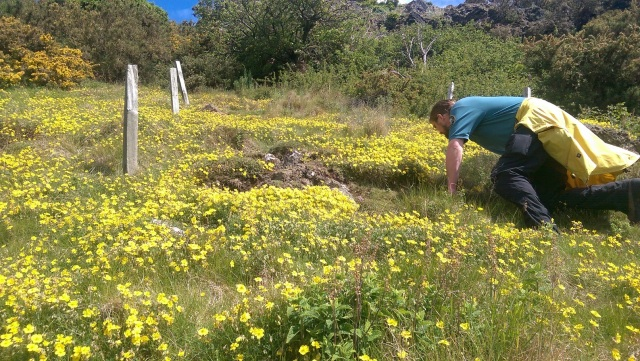 There are regular wildflower surveys at Holyrood Park.. ©Historic Environment Scotland