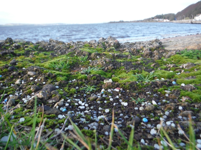 Plastic nurdles on the beach in Limekilns, Fife. ©Madeleine Berg/Fidra