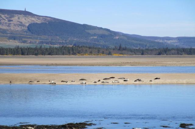 You can't miss the harbour seals out on the sand bank.