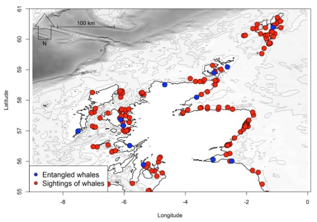 Humpback whale records from 1992-2016 in Scottish waters (including entanglements) (Ryan et al., 2016).