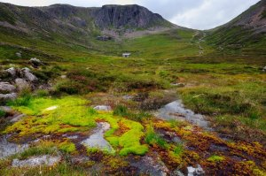 Upland spring in Coire Etchachan ,Cairngorm National Park. ©Lorne Gill/SNH