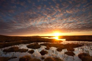 Pools and bog peatland at dawn, Flows NNR. ©Mark Hamblin/2020VISION