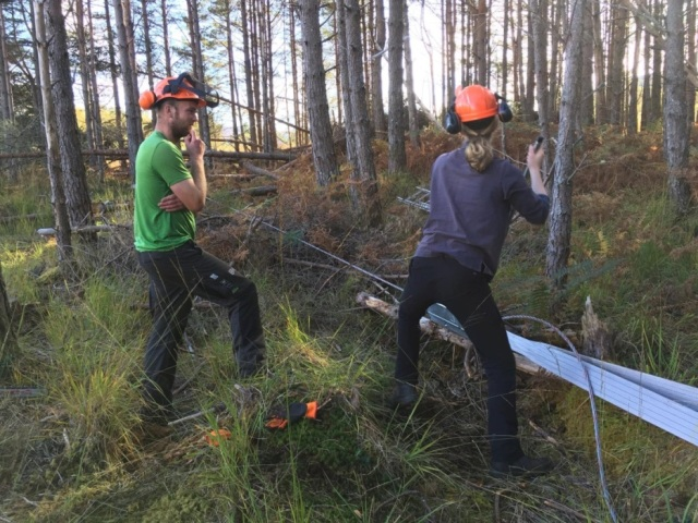 Felling trees by winch simulates natural felling from windblow.