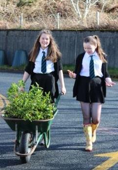 Hebe planting at Gairloch High School. © Emma Smith