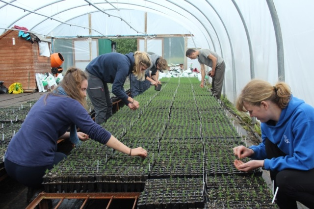 Volunteers carry out work at the tree nursery.