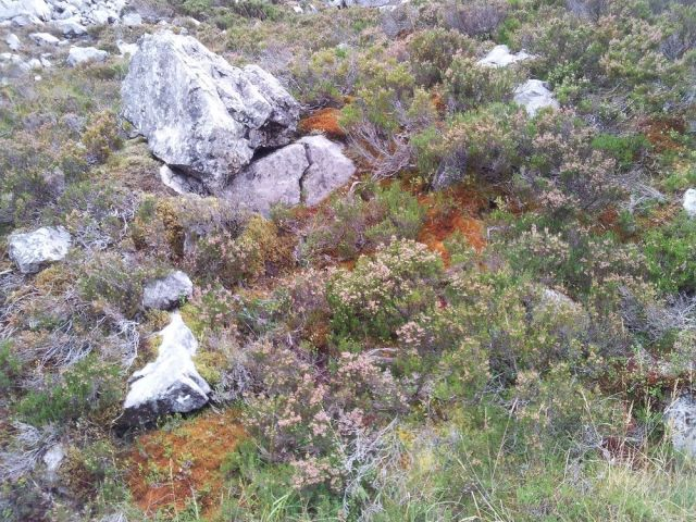 Orange patches of northern prongwort can be found on Beinn Eighe's north-facing slopes. © Stuart MacKenzie