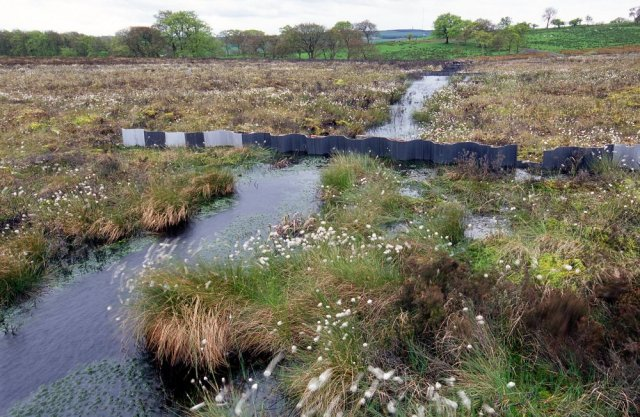 Blocked ditch at Blawhorn Moss NNR.